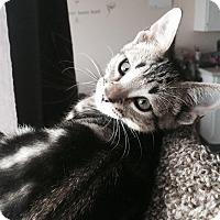 Adopt A Pet :: Ty - Edmonton, AB