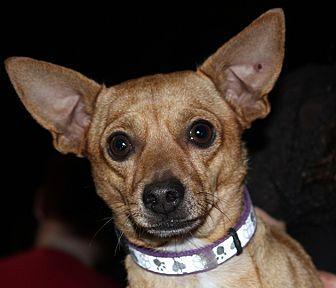 Chihuahua Mix Dog for adoption in Redlands, California - Pedro
