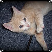 Adopt A Pet :: Mikey - South Plainfield, NJ