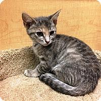 Adopt A Pet :: Sugar - Riverside, CA