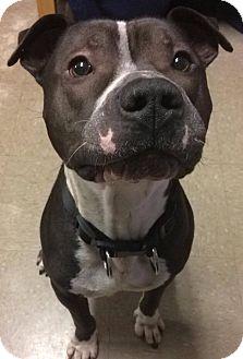 Terrier (Unknown Type, Medium) Mix Dog for adoption in Greensboro, North Carolina - Hemingway