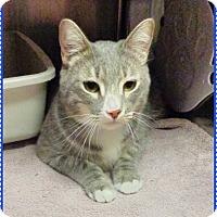 Adopt A Pet :: DIEGO-available 3/26 - Marietta, GA