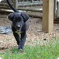 Adopt A Pet :: Bunny - New Boston, NH