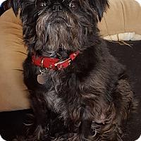 Adopt A Pet :: Darla - Chicago, IL