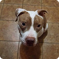 Adopt A Pet :: Letty - Covington, TN
