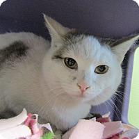 Adopt A Pet :: Rachel - Medina, OH