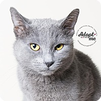 Adopt A Pet :: Sammi - Apache Junction, AZ