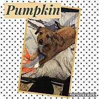 Adopt A Pet :: Pumpkin - Unionville, VA