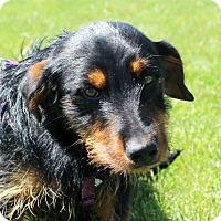 Adopt A Pet :: Miagi - Lisbon, IA