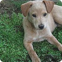 Adopt A Pet :: Simon - Humboldt, TN