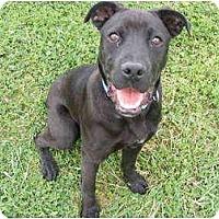 Adopt A Pet :: Spike - Gonzales, TX