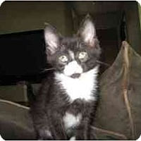 Adopt A Pet :: Sophia - Milwaukee, WI