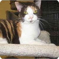 Adopt A Pet :: Reese - Deerfield Beach, FL