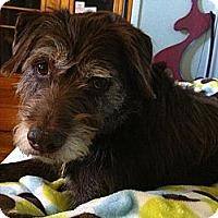 Adopt A Pet :: Kenya - Denver, CO