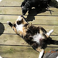 Adopt A Pet :: Tinka - Crane Hill, AL