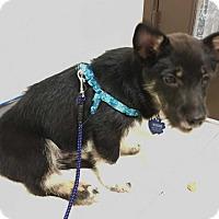 Adopt A Pet :: Meeko - Fullerton, CA
