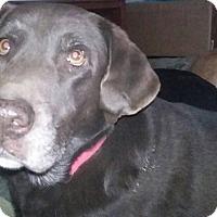 Adopt A Pet :: Candy - Columbus, IN