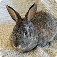 Adopt A Pet :: Elwood - Paramount, CA