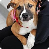 Adopt A Pet :: Floki - Harrison, NY