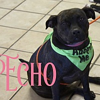 Boxer/Pit Bull Terrier Mix Dog for adoption in Cheney, Kansas - Echo