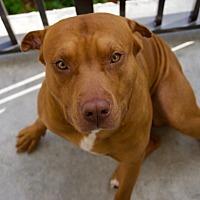 Adopt A Pet :: Cudi - Ocean Ridge, FL