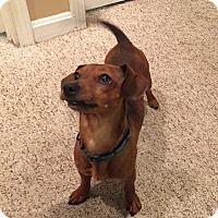 Adopt A Pet :: Thumper - Georgetown, KY