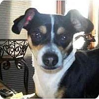 Adopt A Pet :: Simon - Johnsburg, IL