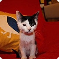 Adopt A Pet :: Jeff (LE) - Little Falls, NJ