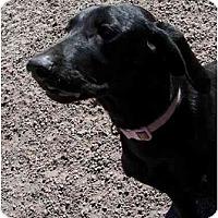 Adopt A Pet :: Molly - Eustis, FL