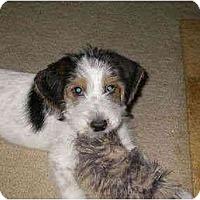 Adopt A Pet :: Riley - Sugarland, TX