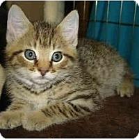 Adopt A Pet :: Alfie - Richmond, VA