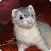 Adopt A Pet :: Sterling - Chantilly, VA