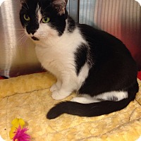 Adopt A Pet :: Tina - Muncie, IN