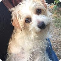 Adopt A Pet :: Millie - Van Nuys, CA