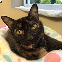 Adopt A Pet :: May - Byron Center, MI
