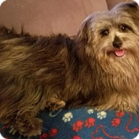 Adopt A Pet :: Wookie - Alexandria, KY