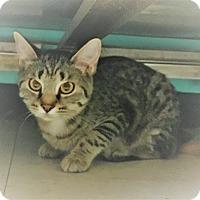 Adopt A Pet :: Lucy - Monroe, MI