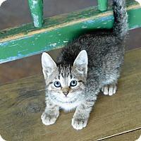 Adopt A Pet :: Fawn - San Antonio, TX