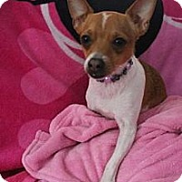 Adopt A Pet :: Elvis - New Boston, NH