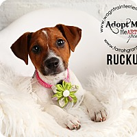 Adopt A Pet :: Ruckus-Pending Adoption - Omaha, NE
