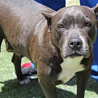 Adopt A Pet :: Marina - Los Angeles, CA