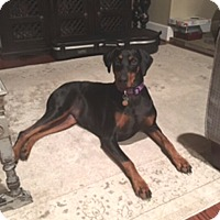 Adopt A Pet :: Molina - Gig Harbor, WA
