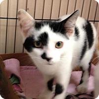 Adopt A Pet :: Milly Moo - East Brunswick, NJ