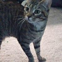 Adopt A Pet :: Chance WK - Schertz, TX