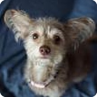 Adopt A Pet :: Graciela - Canyon Country, CA