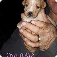 Adopt A Pet :: Maggie - Albany, NC