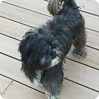Adopt A Pet :: Bruno - Homer Glen, IL