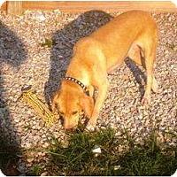 Adopt A Pet :: Sandy - Irvington, KY