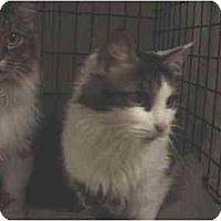 Adopt A Pet :: Oreo - Easley, SC