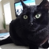 Adopt A Pet :: Munkey - Vancouver, BC